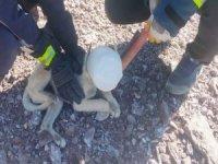 Başı bidona sıkışan köpek kurtarıldı