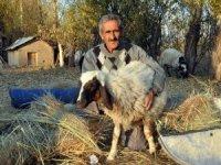 'Sarı Kız'ın sahibi Emin Amca artık çok mutlu