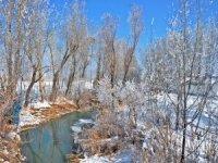 Yüksekova'da ağaçlar dondu
