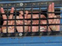 6 kişi gözaltına alındı 1 kişi tutuklandı