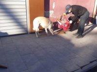 Çukurca'da sokak hayvanlarına mama desteği