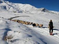 Vanlı çobanlar yayla sezonunu kapattı