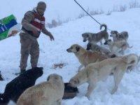 Mehmetçik sokak hayvanlarını unutmadı