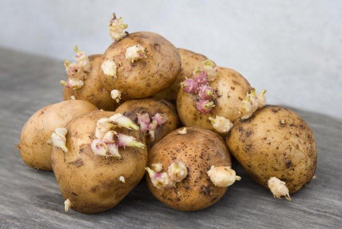 filizlenen-patates-oldurebilir.jpg