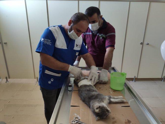 kedi-ameliyati-2.jpg