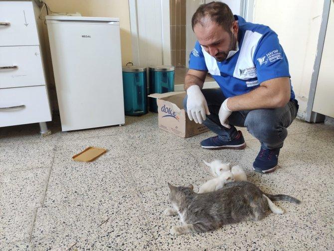 kedi-ameliyati-3.jpg