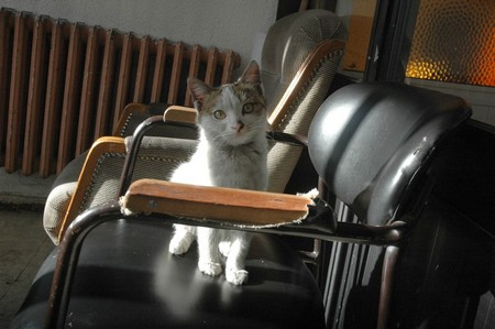 kedi-belediye-2.jpg