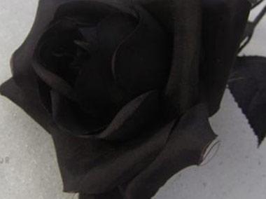 siyah-gul.jpg